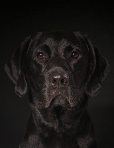 hondenfoto's