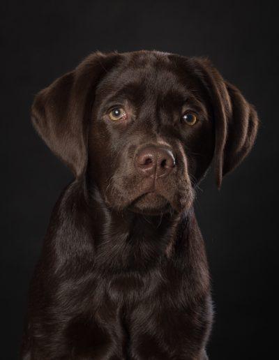 hondenfoto's, De Hondenfotograaf Nijmegen