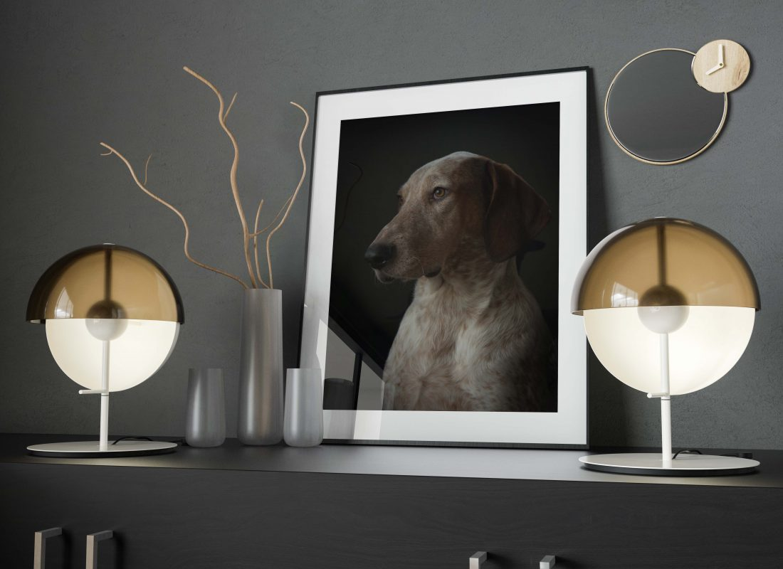Hond Joep