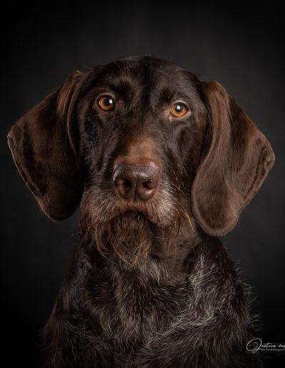 De Hondenfotograaf Nijmegen